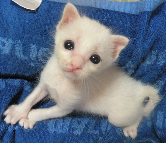 赤ちゃん猫