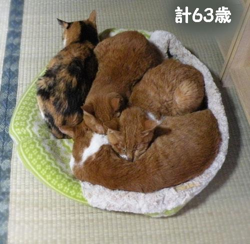 4ニャンの高齢猫団子合計63歳