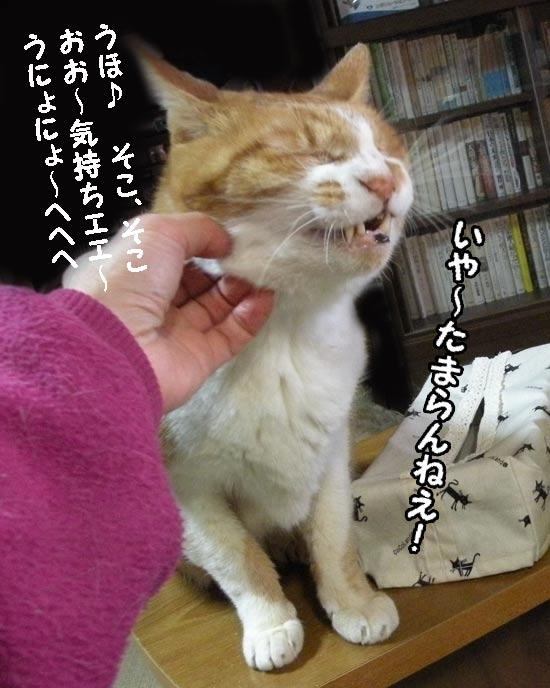カイカイされる猫