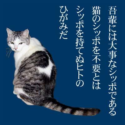 あってもなくても猫のしっぽ