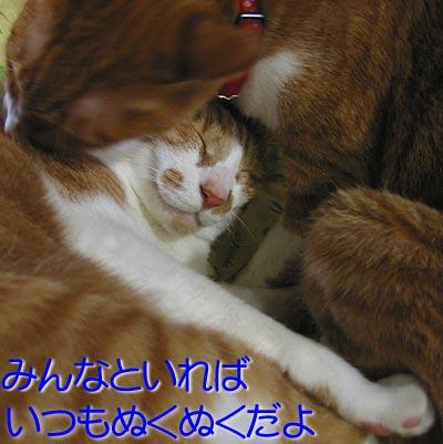 ぬくぬくする猫達
