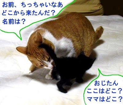 大人猫と子猫