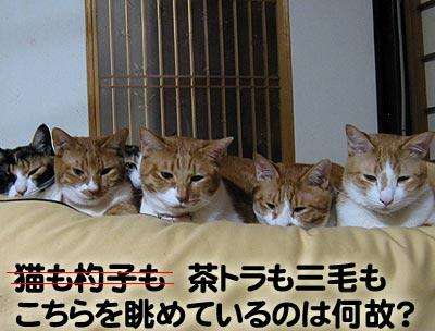 並んでこっちを見ている猫達