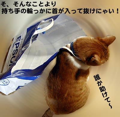紙袋の取っ手に首がはまって抜けない猫