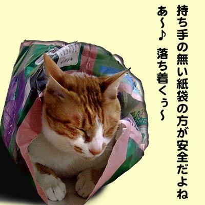 紙袋にはいった猫