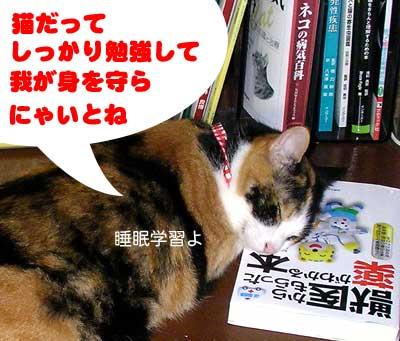本を枕に寝ている猫