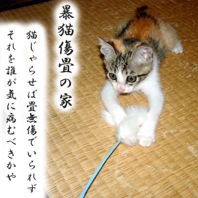 子猫とボロボロな畳
