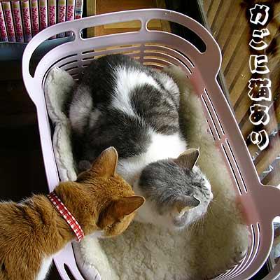 かごにはいった猫