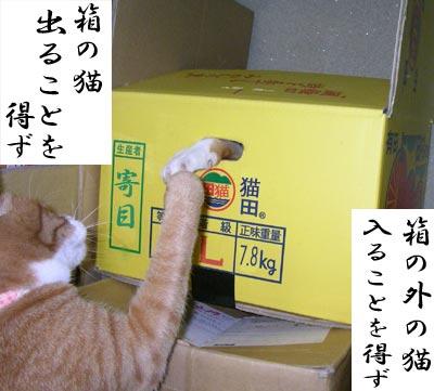 箱の中と外で遊ぶ猫たち