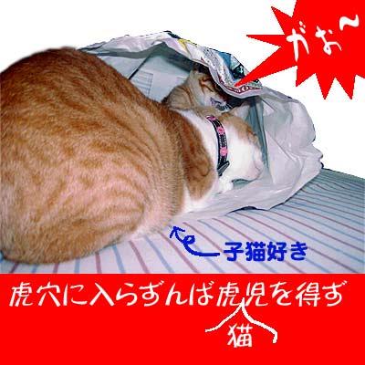 猫と子猫と紙袋
