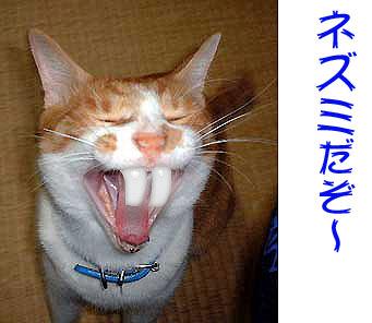 猫にネズミの歯を合成