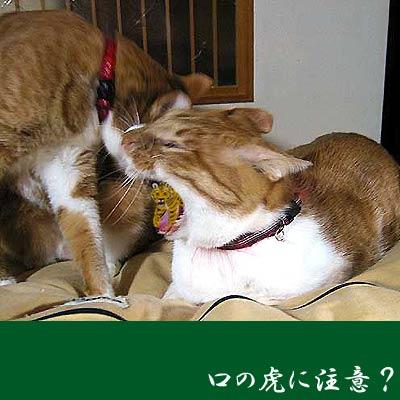 猫の口の中にトラ