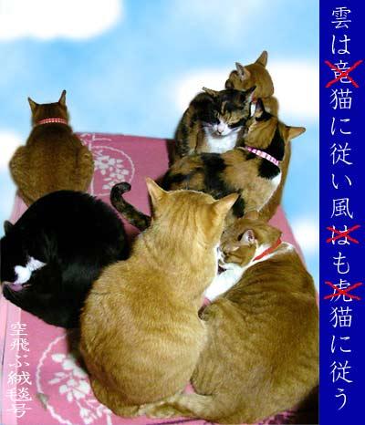 毛布の上の猫団子