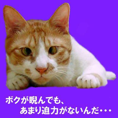 より目の猫