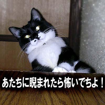 偉そうに見下ろしている猫