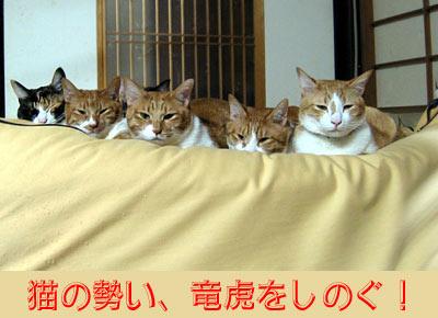 ずらりと並んだ猫達