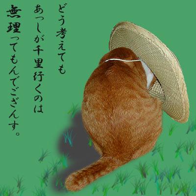 麦わら帽子をかぶった猫
