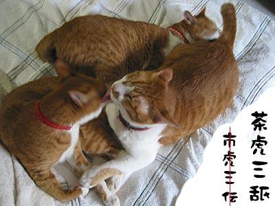茶トラ猫団子