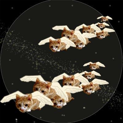 翼で飛んでいるトラ猫