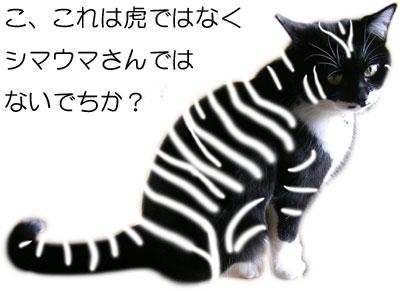 しましま模様の猫