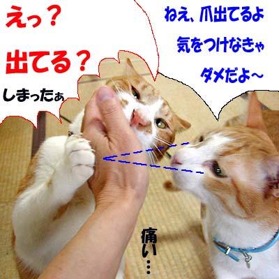 手にじゃれる猫の爪が少し出ている