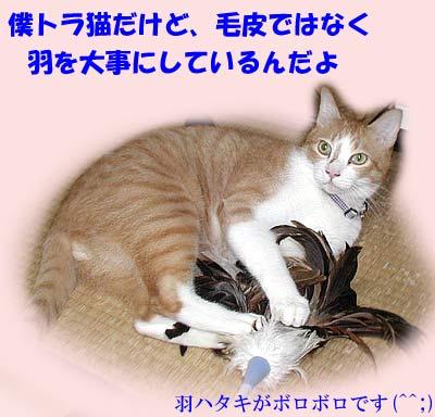 羽はたきにじゃれる猫