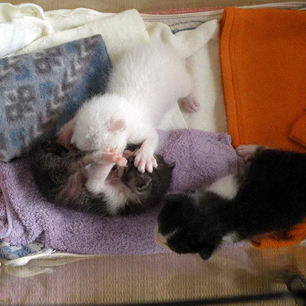 赤ちゃん猫たち