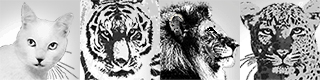 猫虎獅子豹