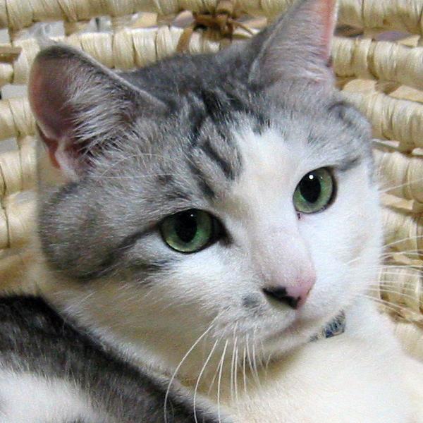 猫のレオ様