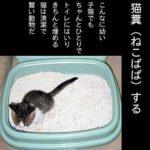 トイレの子猫