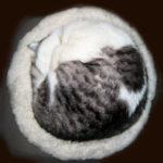 まん丸に寝る猫